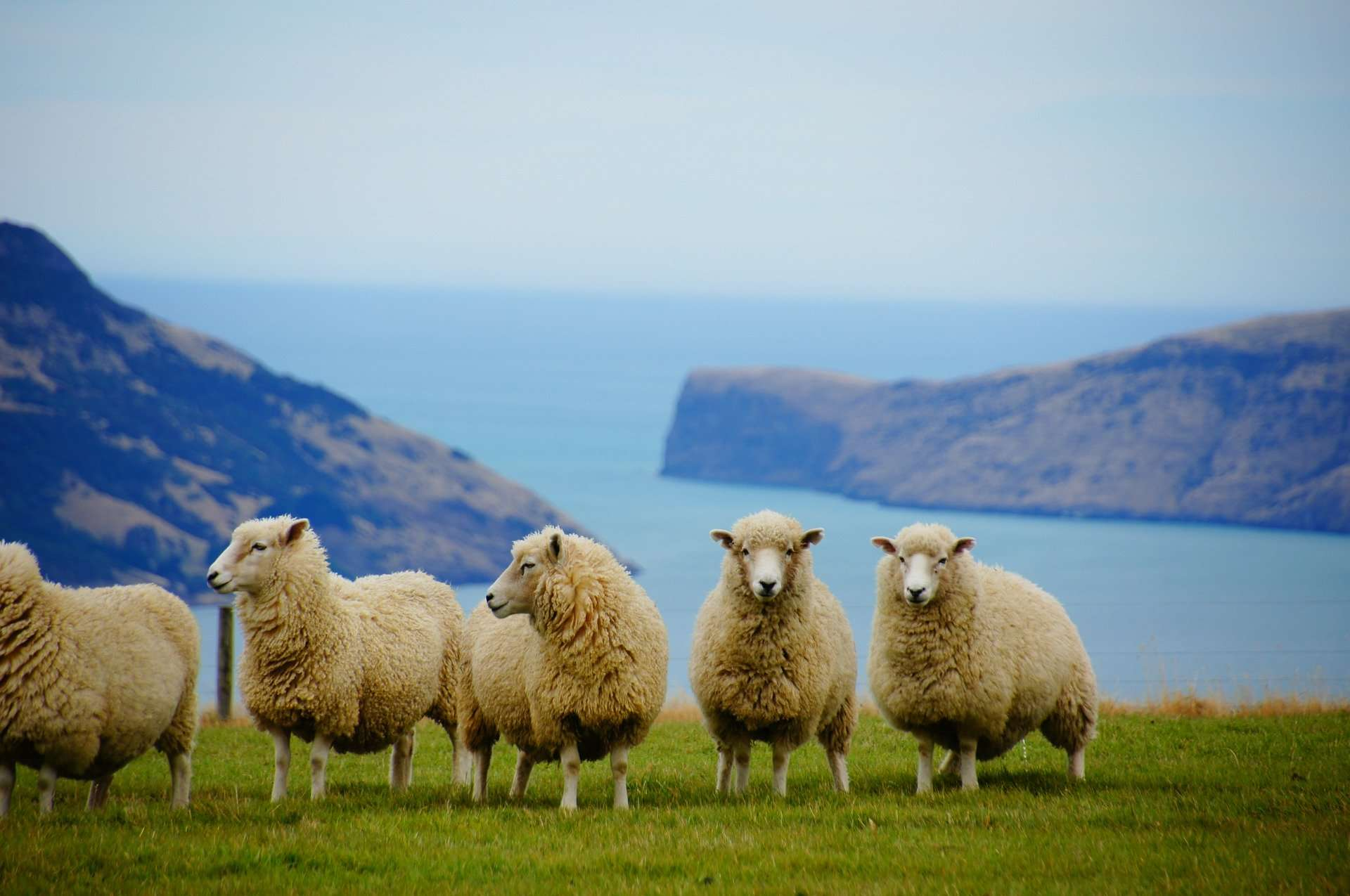 Coronavirus: Akaroa businesses fear devastating impact of cruise ship restrictions